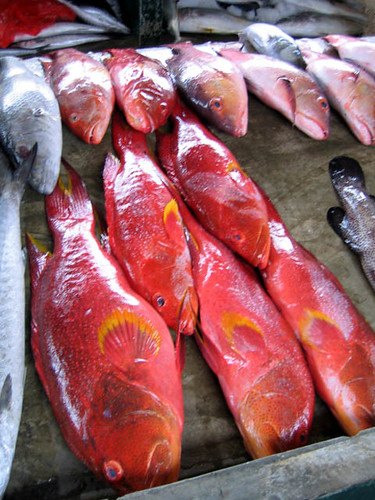 Seychelles fish in market. Photo by Jamie Oliver, 2005
