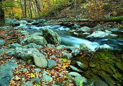 Autumn flowing forest river