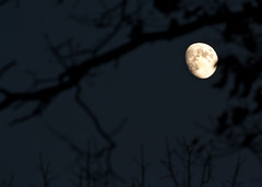 Autumn Moon (subadei) Tags: autumn trees moon canon vermont 55250mmefs