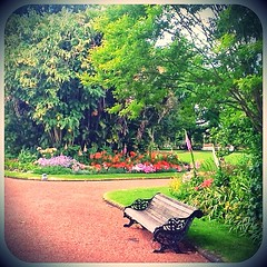Alone but not lonely... #ipad2 #iphoneography #ipadnesia #auckland #newzealand #garden #instagood #photooftheday #pixlromatic