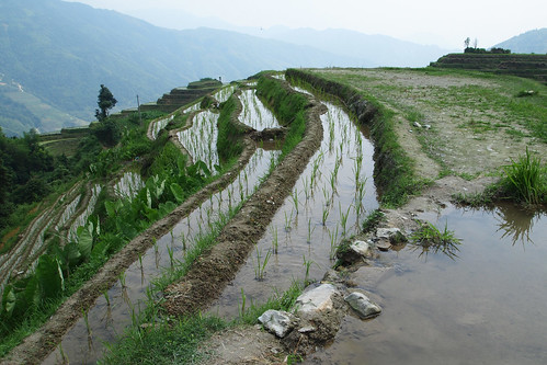 Ping'an paddy fields
