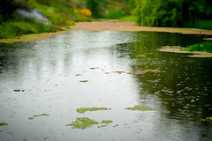 The Rain... (Lisandro M. Enrique) Tags: naturaleza verde green nature argentina rain reflections relax drops lluvia pond sony calm gotas estanque crdoba reflejos tanti smalllake a55