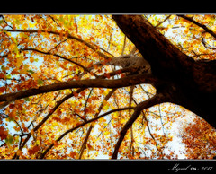 Sueo otoal. / Autumnal dream. (Miguel Angel SGR) Tags: travel autumn trees espaa naturaleza color colour tree verde fall love nature leaves hojas nikon europa europe niceshot arboles amor murcia viajes trips otoo turismo fuentes caravaca caravacadelacruz fuentesdelmarques d3000 nikond3000 doubleniceshot