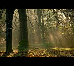 - Magical - (Veronica Van Peet (VeroonsVision)) Tags: 2001 november autumn sun holland tree fall nature bomen seasons herfst sunrays magical beeld jaargetijden emotie idream nikond90 veronicavanpeet veroonsvision