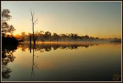 Relax (WanaM3) Tags: park trees mist lake reflection nature water sunrise gold pond scenery texas scenic bayou boardwalk pasadena bayareapark goldenmoment armandbayou wanam3