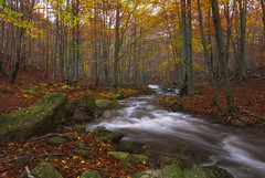 Que fluya la naturalidad (christian&alicia) Tags: santa autumn trees water forest river nikon natural sigma catalonia arbres catalunya fe 1020 parc hdr bosc tardor fageda montseny catalogne d90 hayedo riera christianalicia ilobsterit