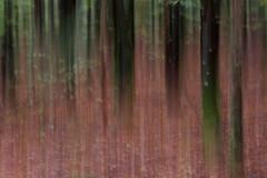 Bayerischer Wald (b.anastasia) Tags: herbst bayerischerwald