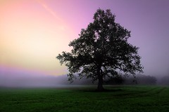 just a tree (D.Reichardt) Tags: morning tree nature fog sunrise germany friend europe alone country wideangle pastell stubben mygearandme musictomyeyeslevel1