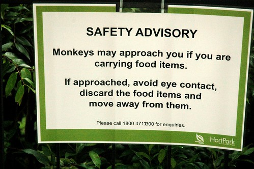 Sadly, I saw no monkeys