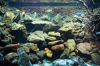 lakebottom biotope