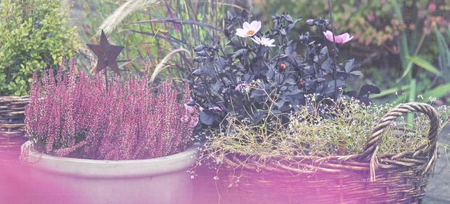 rosa höst