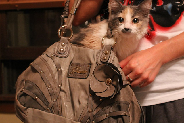 Purse Kitty
