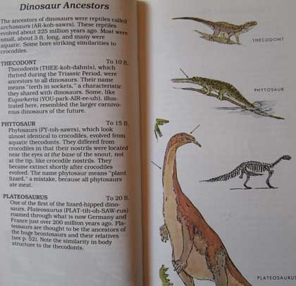 Peterson First Guides: Dinosaurs pp. 26-27