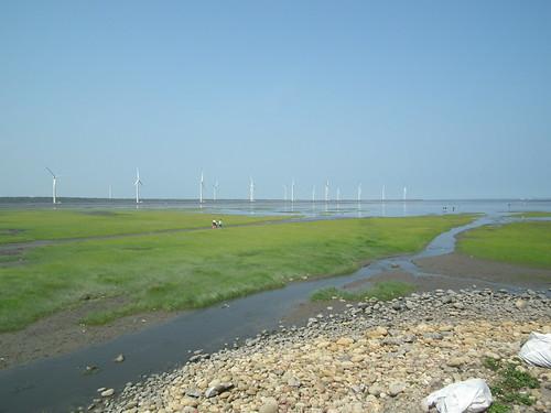 位處亞熱帶的台灣,海岸溼地更具碳吸存力。(攝影:劉良力)