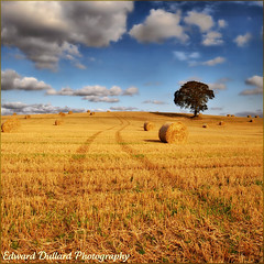 A bountiful crop. (Edward Dullard Photography. Kilkenny, Ireland.) Tags: irlanda ierland irish emeraldisle eire ireland carlow edwarddullardphotographykilkennyireland landscape nature paysage field light shadow shade licht sky cloud haybales farm farming agriculture tree bestcapturesaoi flickrstruereflection1 saariysqualitypictures elitegalleryaoi colorphotoaward idream