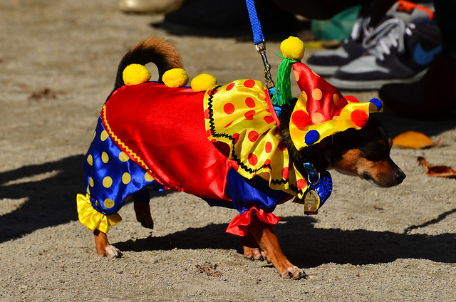 Halloween Dog Parade