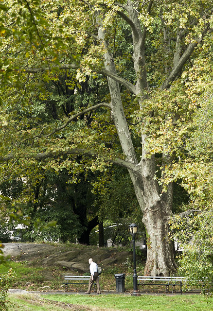 """Central Park • <a style=""""font-size:0.8em;"""" href=""""http://www.flickr.com/photos/32810496@N04/6272187302/"""" target=""""_blank"""">View on Flickr</a>"""