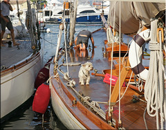nice and clean (mhobl) Tags: dog port ship regatta sainttropez tuiga klarschiff