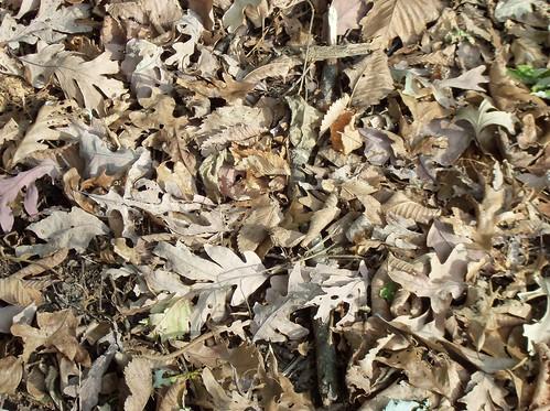 Fall in the oak grove