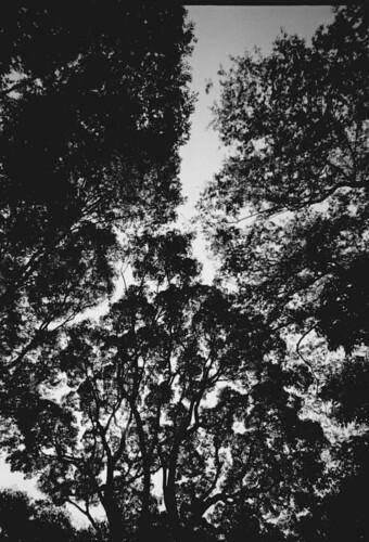 神が宿る森