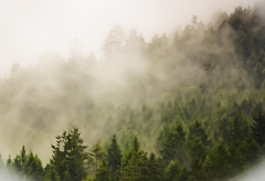 In the Mist (ash2276) Tags: trip travel trees vacation mist canada fog garden bay bc getaway britishcolumbia foggy victoria brentwood butchart ald mistly ash2276 ashleyduffus 2012cal ashleylduffus wwwashleysphotoscom