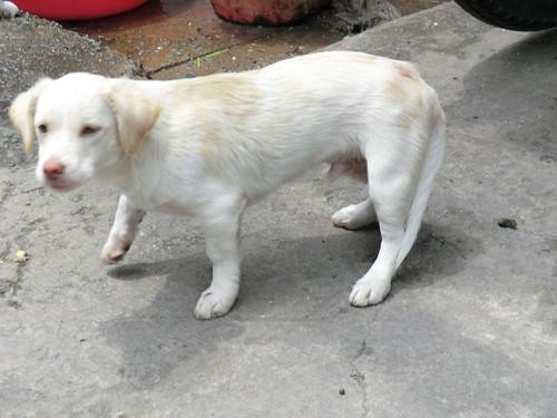 a dog near LOTTE Mart in Ho Chi Minh