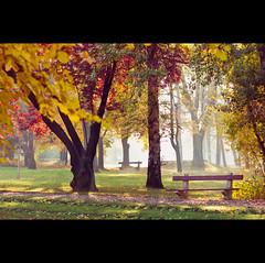 Day Two Hundred and Ninety-one (ODPictures Art Studio LTD - Hungary) Tags: autumn color fall nature fog canon eos hungary 85mm 365 természet hungarian köd demography 2011 gödöllő ősz 60d orbandomonkoshu