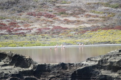 flamingos passing by