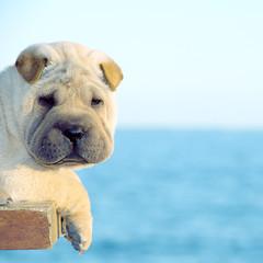 Da CXLIX (Soler, Laura) Tags: espaa dog beach canon mar spain mediterraneo playa perro alicante minimalist minimalista villajoyosa