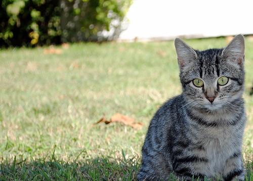Kittens 24