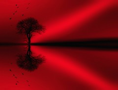 ALL HALLOW'S EVE (THE SECRET TREE) (kenny barker) Tags: red abstract tree art halloween water monochrome birds landscape scotland alberoefoglia panasonicg1 kennybarker