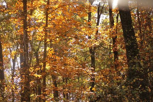 leaves 057