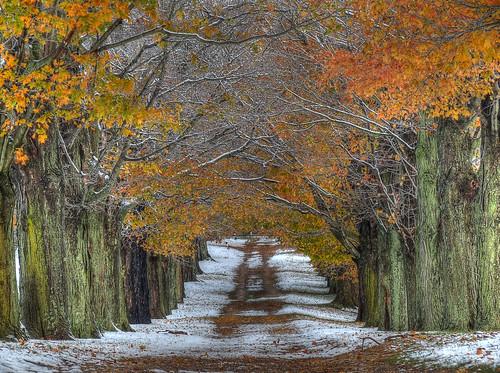 [フリー画像素材] 道路・道, 樹木, 紅葉・黄葉, 風景 - アメリカ合衆国 ID:201111070800