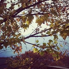 風立ちぬ 今は秋~♪