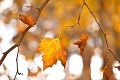 (Antonio Carrillo (Ancalop)) Tags: autumn espaa colors del canon de la spain europa europe bokeh mark murcia cruz ii l otoo 5d usm lopez antonio marques fuentes carrillo 70200mm caravaca ancalop