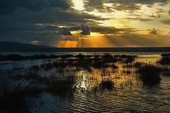 La spiaggia scomparsa (Tati@) Tags: storm beach nature sunrise day flood spiaggia cagliari poetto mareggiata mygearandme mygearandmepremium mygearandmebronze mygearandmesilver mygearandmegold mygearandmeplatinum mygearandmediamond