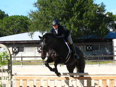 Fox Lea Farm Horse Show, Venice, Florida 11.6.2011