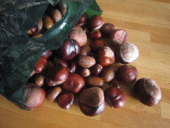 Chestnuts and acorns
