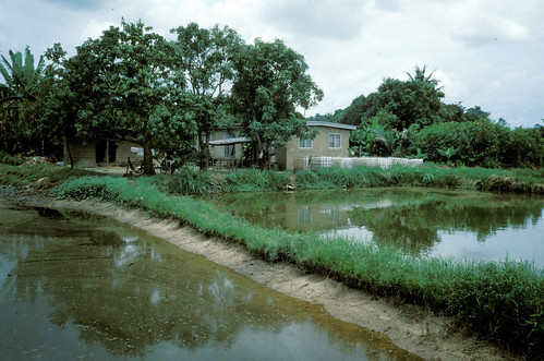 Aquaculture, Malawi. Photo by Randall Brummett, 2002