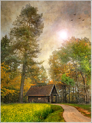 Behind the tree (Jean-Michel Priaux) Tags: autumn trees house mountain france tree home nature forest photoshop painting landscape nikon alsace chalet paysage hdr bois cabane abri d90 autome chlet priaux thannenkirch mygearandme ringexcellence