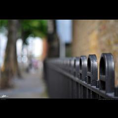 London in my eyes [76] - two trees (guido ranieri da re: work wins, always off) Tags: london fence nikon londra indianajones recinzione d700 fencefriday nonsonoglianniamoresonoichilometri guidoranieridare londoninmyeyes 100shotsforlondon londraneimieiocchi 100scattiperlondra