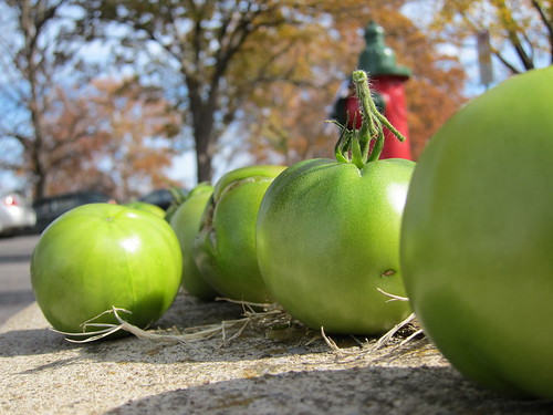free green tomatoes