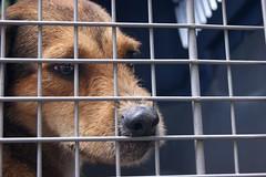 El sentir, una constante universal! (il Castigliano) Tags: animal fauna tristeza perro animales medellin proteccion antioquia abandonado rescate callejera