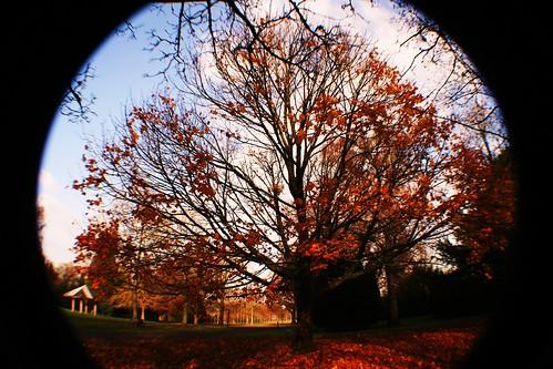 Tree in Autumn at Rouken Glen