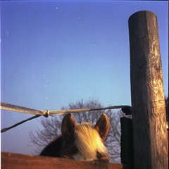 be tuned (Fl:ckrnauta) Tags: horse 6x6 film mediumformat fuji g mat 124 100 yashica reala 120mm expiredfilm yashicamat124g c41 pellicola fujireala100 medioformato 220mm expiredroll