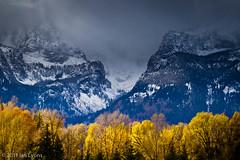 Golden Cottonwoods and Teton Mountains, Grand Teton National Park (IanLyons) Tags: usa mountains northamerica wyoming grandtetonnationalpark schwabacherslanding