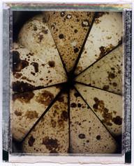 9 Quail Eggs 1 Time (Dylan) Tags: brown macro nature analog polaroid fuji doubleexposure egg experiment spots nophotoshop quail fp100c polaroidcu5 cu5