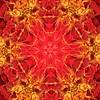 Kaleidoskop_Blume