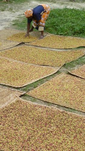 Cloves drying