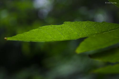 leaf by inés k.
